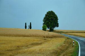 landscape_roadside_performance_mowing